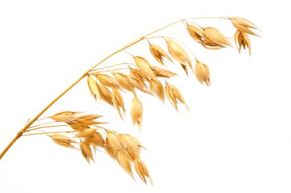 oat_plant_xsmall