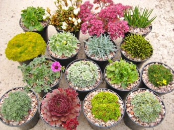 16 plant Raised Bed  collection, 9cm round pots