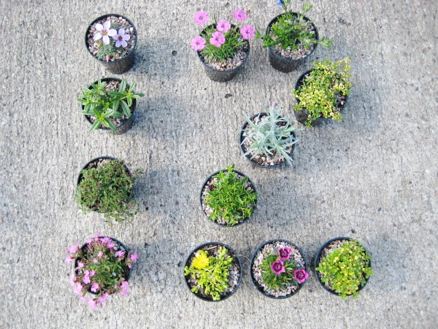 12 alpines for general garden use collection