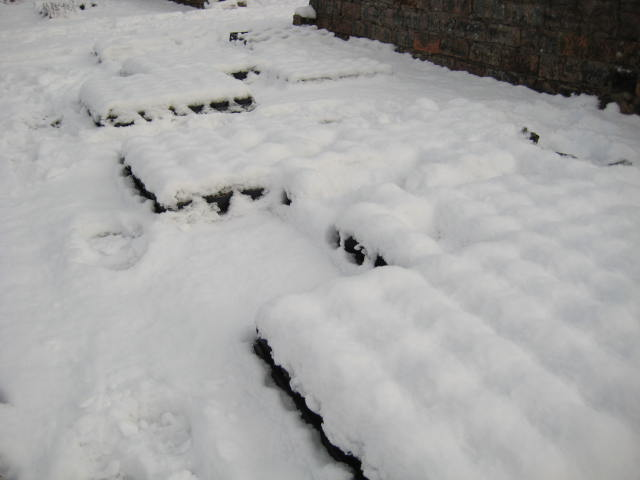 Plants under snow, January 2015