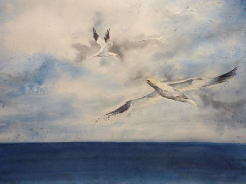 GANNETS ON THE HUNT