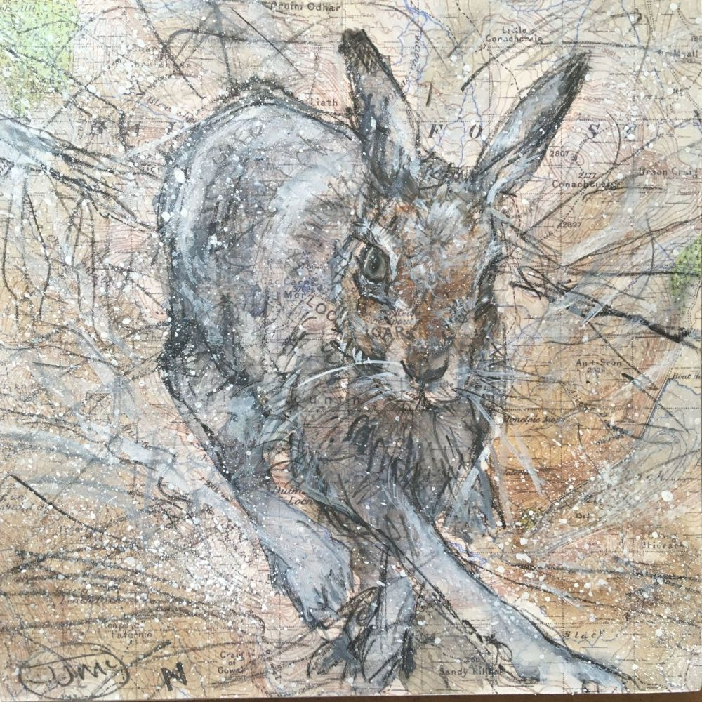 MOUNTAIN HARE, LOCHNAGAR
