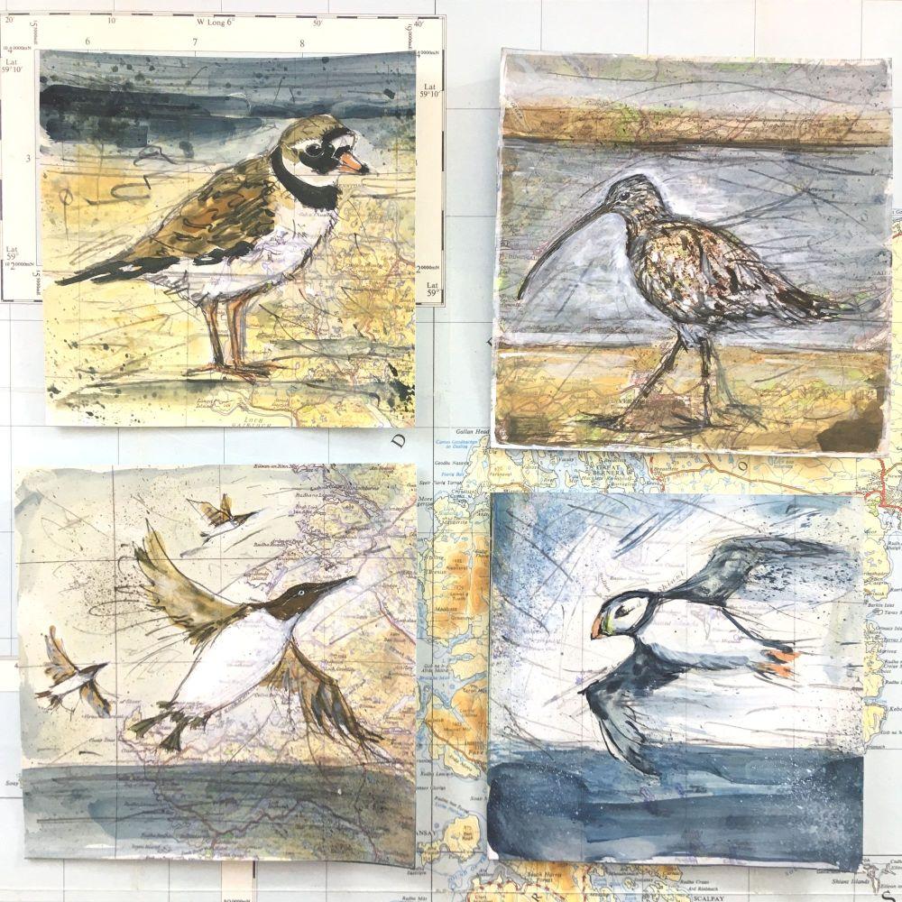 4x BIRD/MAP SKETCHES