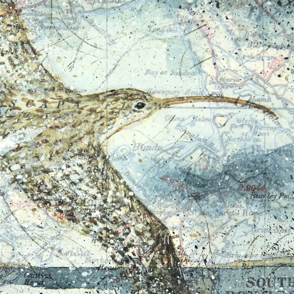 CURLEW ACTION