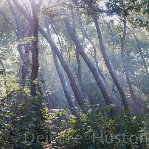 Seasonal woodland photography