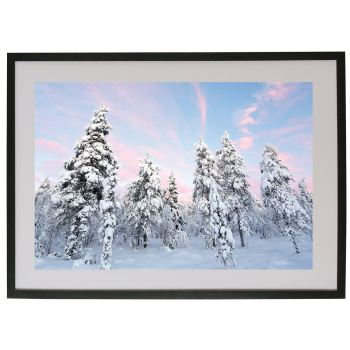 Snowy Pines in Lapland