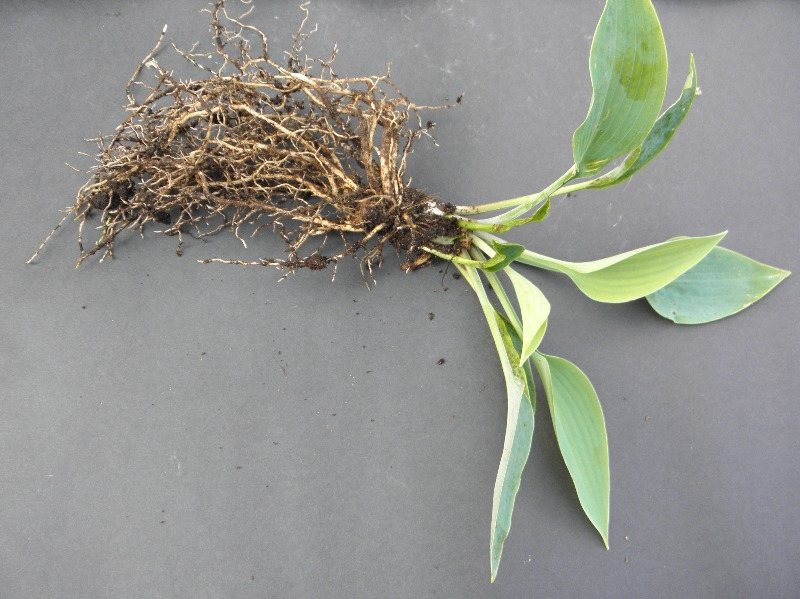 your plant with root system