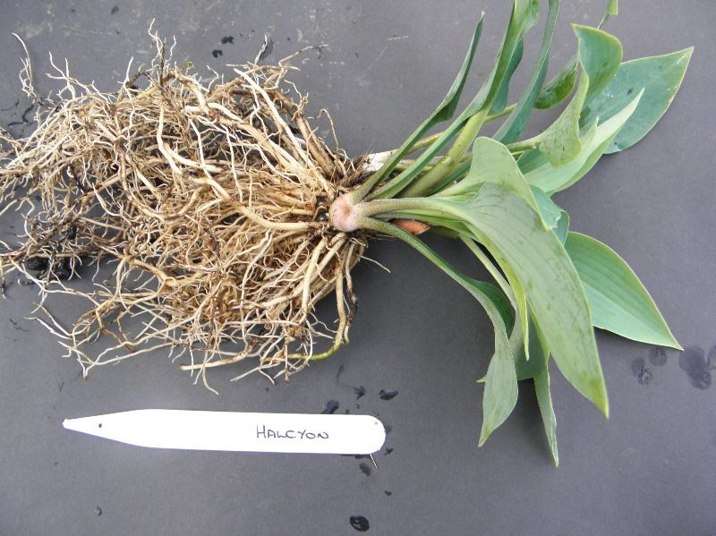 your plant during root inspection