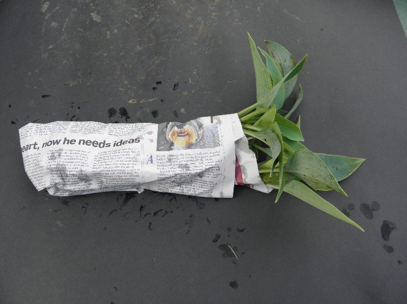 your plant after being wrapped in newspaper