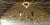 Brockworth Tithe Barn Fairy Light Canopy