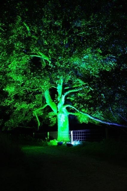 tree floodlighting