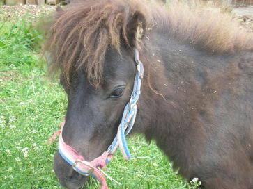 Coco the pony