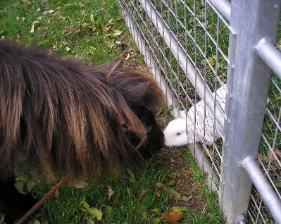 coco and rabbit kissing