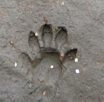 otter footprint comp