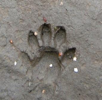 otter footprint comp