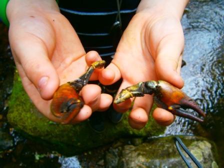 crayfish comp