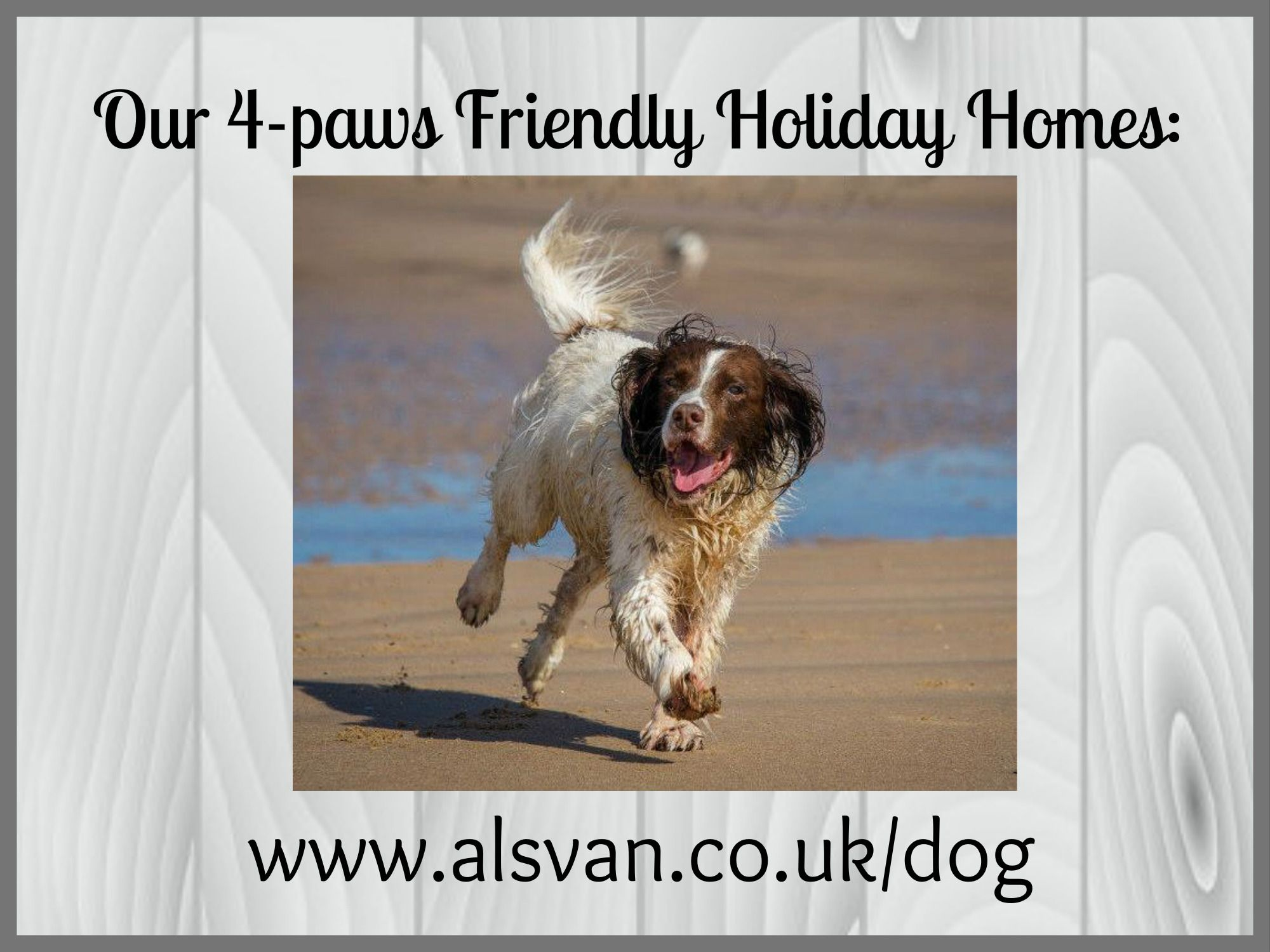 dog-friendly holidays with AVMR
