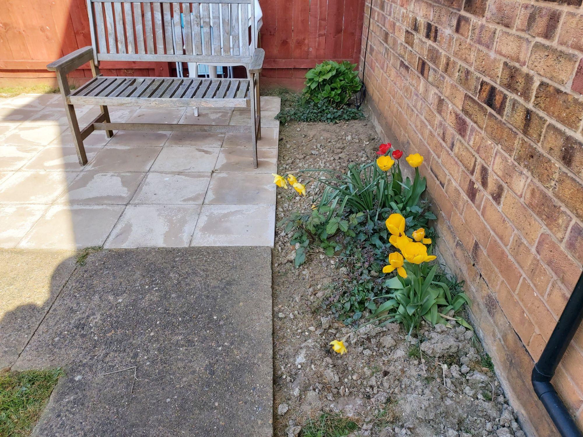 20200407back gardenflowers.jpg