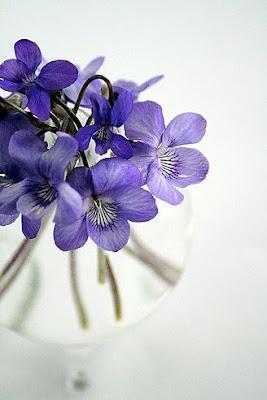 7 violets
