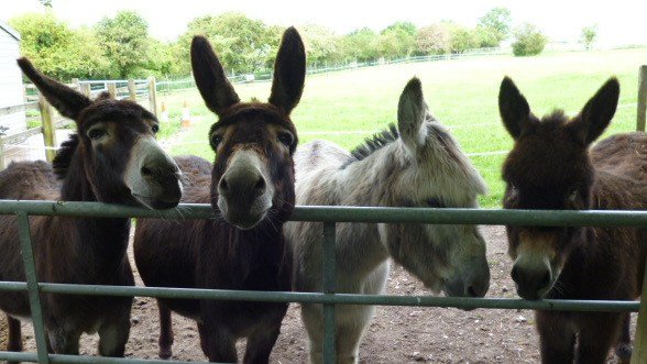 Image Just 4 Donkeys