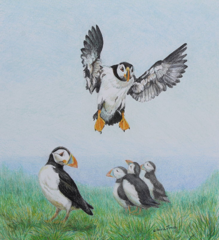 (W114A) Puffin Patrol (unframed original crayon drawing)