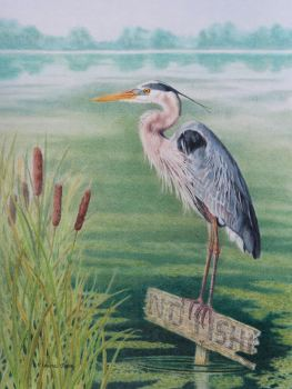 (W117A)  Hungry Heron (original pencil drawing, unframed) SOLD