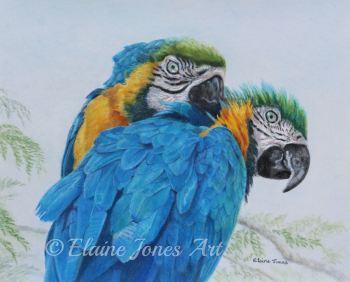 (B118A)  Macaw Mischief