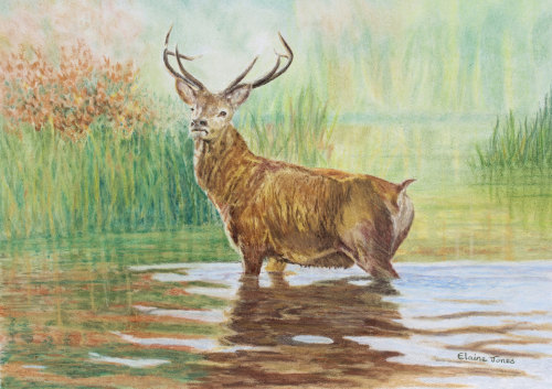 (W121A)  Red Deer Stag in Autumn (original pencil drawing, unframed)