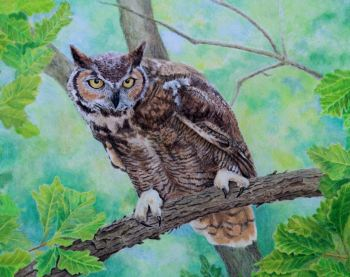 (B123A)  Great Horned Owl