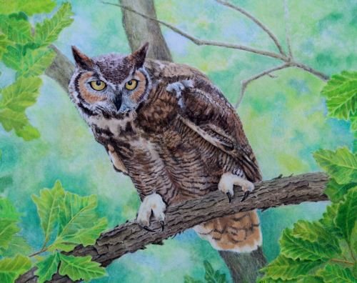 (W123A)  Great Horned Owl (original pencil drawing, unframed)