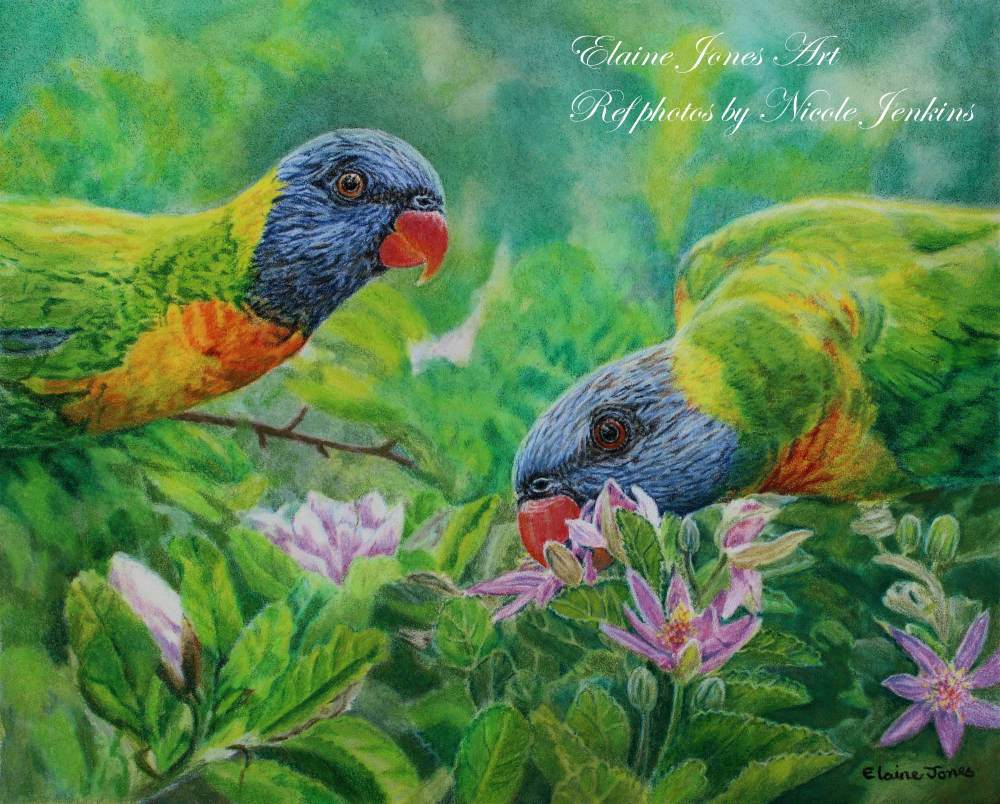 (W125A)  Rainbow Lorikeets (original pencil drawing, unframed)