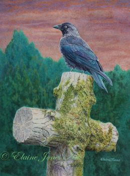 (B127A)  Jackdaw on the old mossy cross