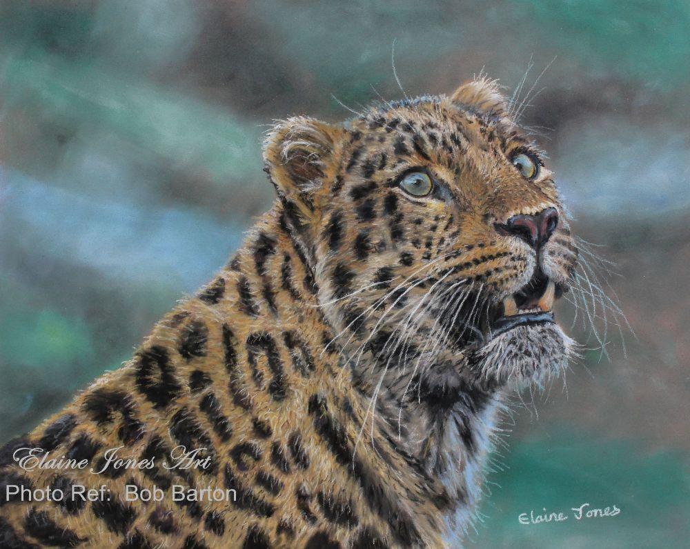 (M105A)  Leopard