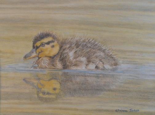 fluffy duckling 8 sept