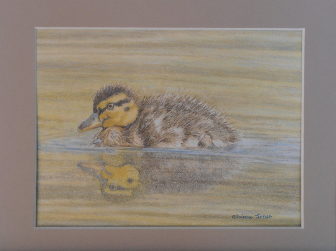 fluffy duckling framed 8 sept