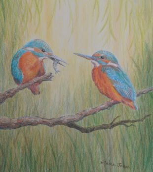 (W108A) Kingfisher Pair  (Original Coloursoft pencil drawing)