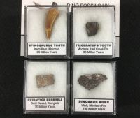 4-pc Fossil Collection