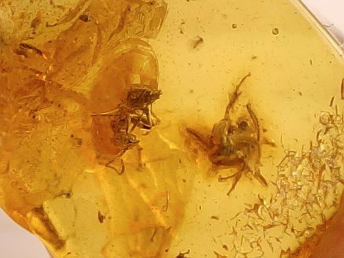 Baltic Amber #11 - Winged Insect Inclusion