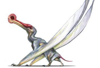 ornithocheirus_by_lieserl-d2zuxjm_98f4