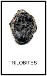 trilobites l
