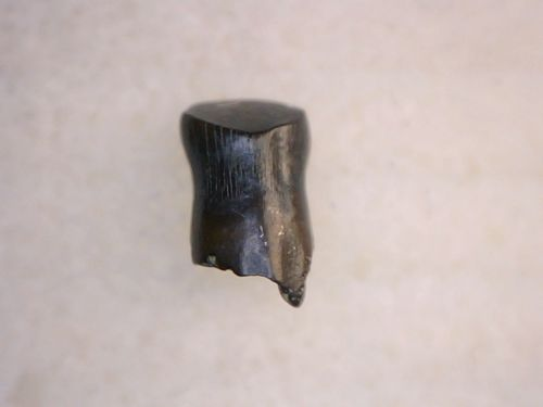 Thescelosaurus Tooth #04