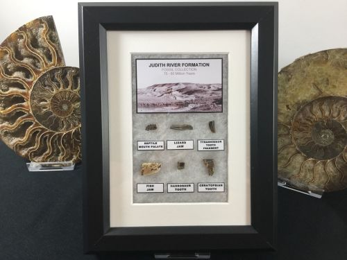 Judith River Fossil Collection (Framed)