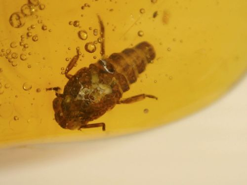 Dominican Amber with Nymph and Leaf #01