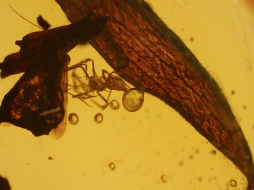 Dominican Amber with Spider, Insect & Leaf Inclusions #04