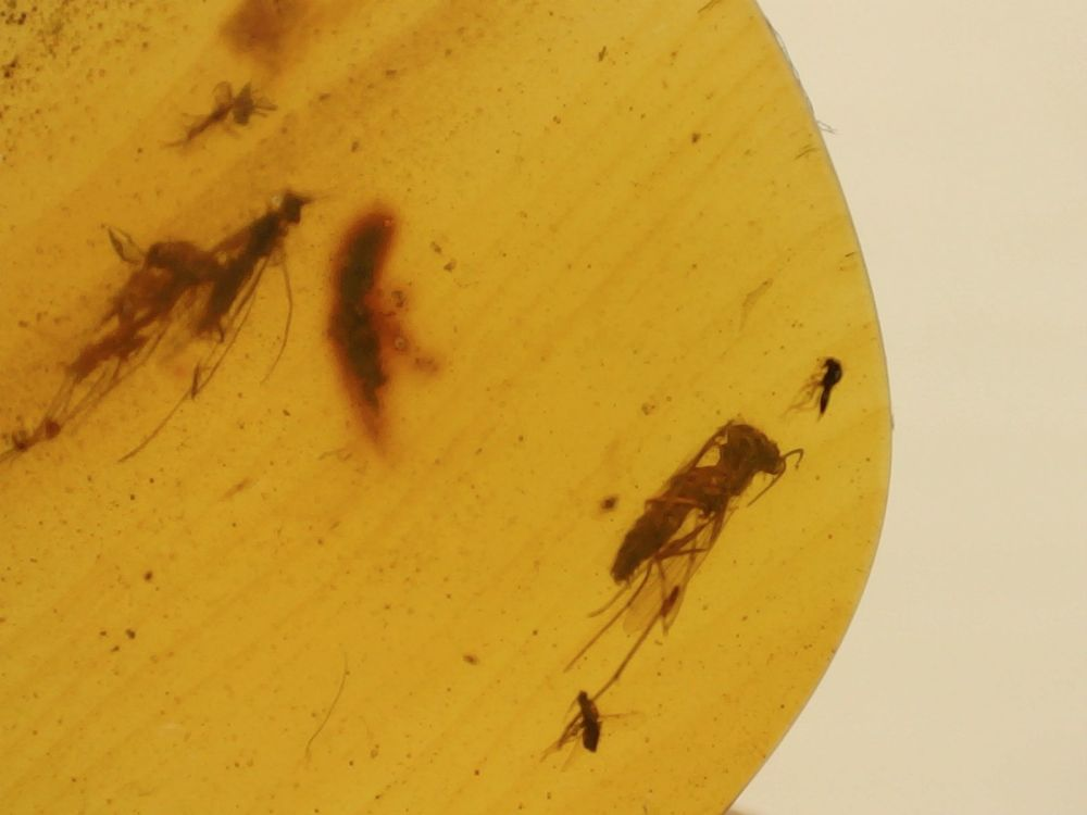 Burmite Amber with Winged Insect Inclusions #03