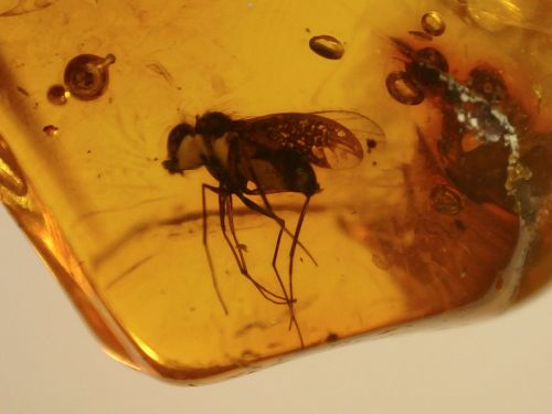 Baltic Amber #02 - Fly Inclusion