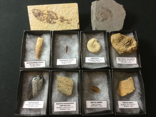 10pc Fossil Collection #03