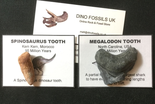 Spinosaurus & Megalodon Collection #07
