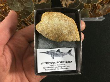 Ichthyosaur Vertebra #03