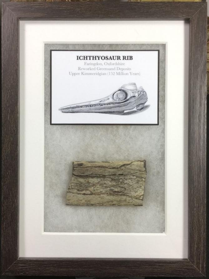 Ichthyosaur Rib (Framed) #01